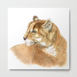 Sunbathing American Mountain Lion Metal Print
