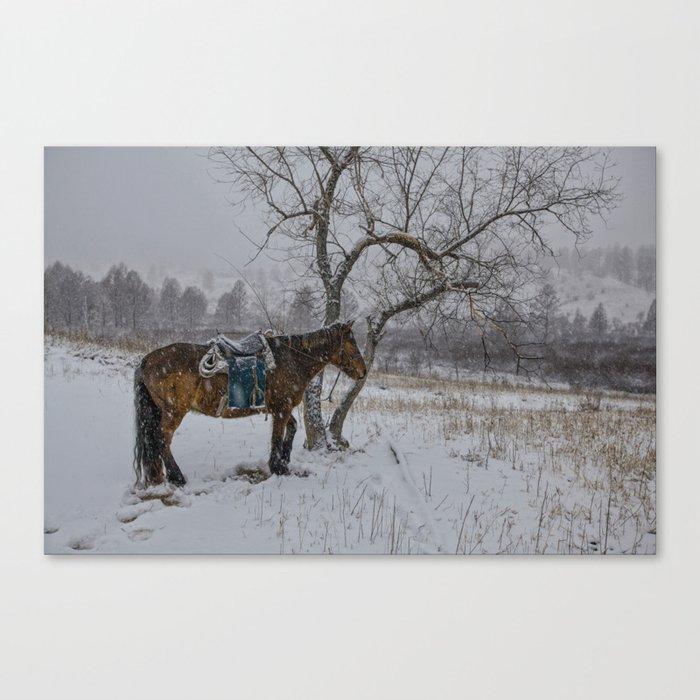 Winter Horse III Canvas Print