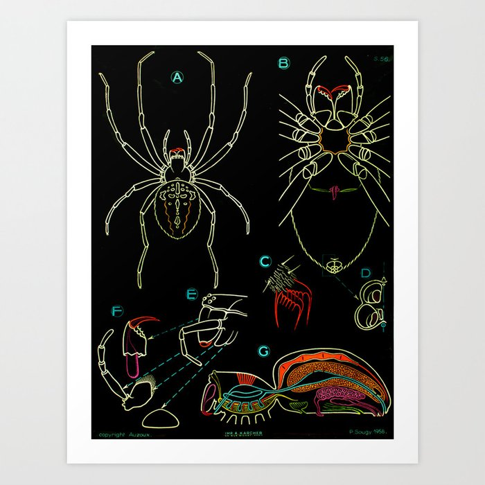 Paul Sougy: The Spider, 1958 (proceeds benefit The Nature Conservancy) Art Print