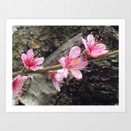 Pretty Pink Cocktail Tree Flowers Art Print