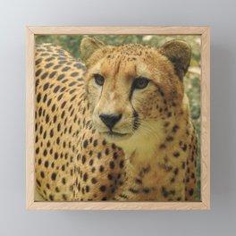 Cheetah Portrait World's Fastest Animal Framed Mini Art Print