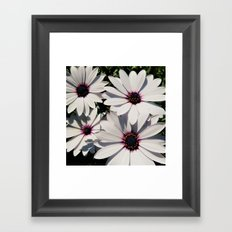 white daises with blue eyes Framed Art Print