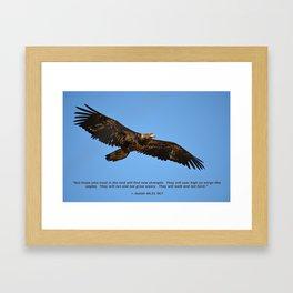 Soaring High!  -  Immature Framed Art Print