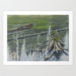 Castor Reflections Art Print