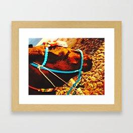 Donkey's face Framed Art Print