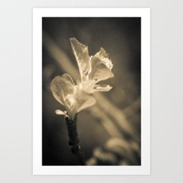 Trace of Spring Art Print