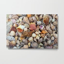 Seashell Collection from Florida Metal Print