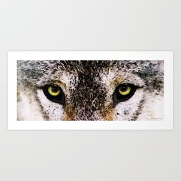 Wolf Eyes - Animal Art By Sharon Cummings Art Print