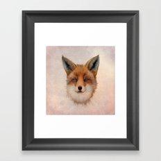 Vulpes vulpes - Red Fox Framed Art Print