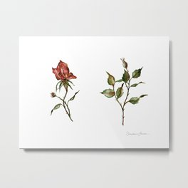 Loose Watercolor Rosebuds Metal Print