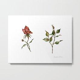 Loose Watercolor Rosebuds Metal Print
