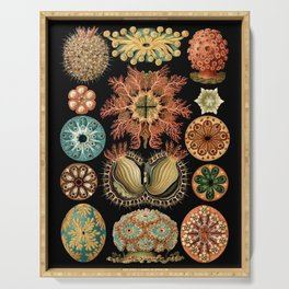 Sea Life Illustrations by Ernst Haeckel, 1904 Serving Tray