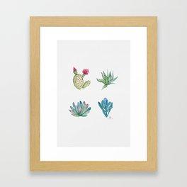 Succulent Sampler with Echoveria, Beavertail Cactus, Blue Chalk Sticks, and Zebra Plant Framed Art Print