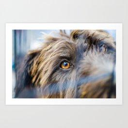 Dog's eye Art Print