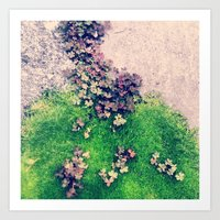 Purple Clover Green Moss Art Print