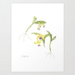 3 Stem flowering yellow and purple cattleya orchid Art Print
