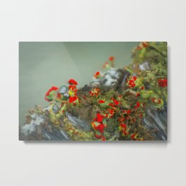 Red Lichen Metal Print