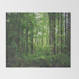 Forest Decke