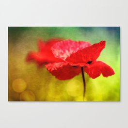 Adorable Poppies... Canvas Print