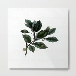 The leaves of the Beech tree Metal Print