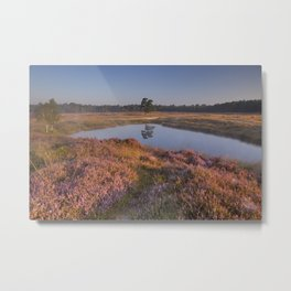 Blooming heather along a lake at sunrise Metal Print