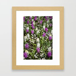 Field of White and Purple Hyacinth Flowers and Daisies in Amsterdam, Netherlands Framed Art Print