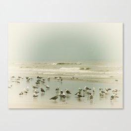 Beach, bird Canvas Print