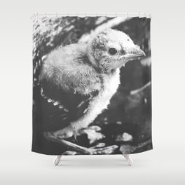 Little Blue Jay Fledgling Black and White Photography Shower Curtain