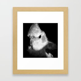 Cockatiel Portrait Framed Art Print