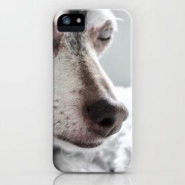 Chillhuahua iPhone Case
