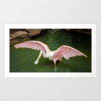 Pink Spoonbill Crane Art Print