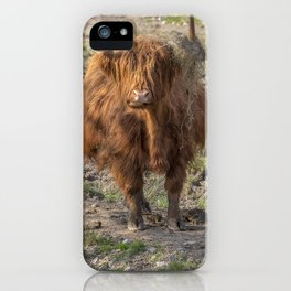 Scottish Highland cow iPhone Case