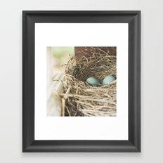 Robin Eggs in nest Framed Art Print
