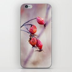 Rose Hips iPhone & iPod Skin