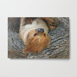 Just Hanging Around Metal Print