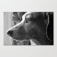 moby Canvas Prints featuring Moby by tessmyers