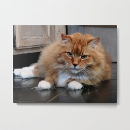 What is this catnip stuff? Metal Print