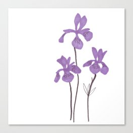 Iris Purple Flower Canvas Print