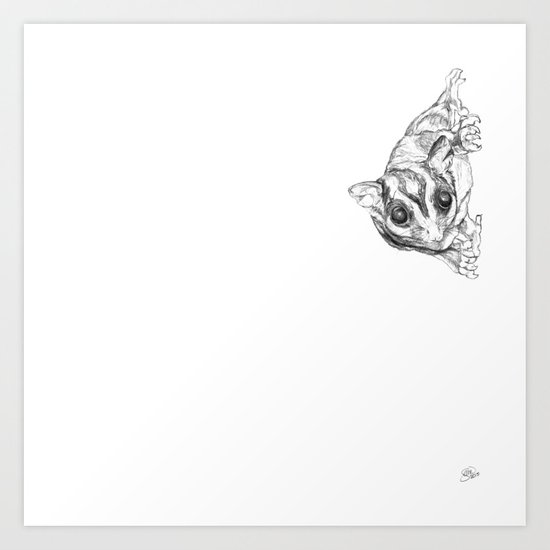 A Sketch :: A Sugar Glider Named Loki Art Print