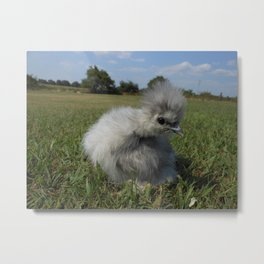 Splash Silkie Chick Metal Print