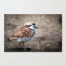 Western Snowy Plover Canvas Print