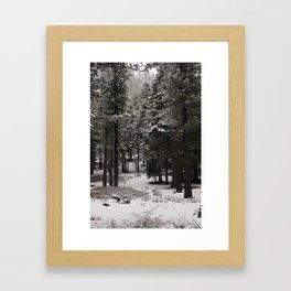 Carol Highsmith - Snow Covered Trees Framed Art Print