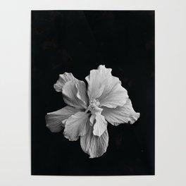 Hibiscus Drama - Black and Grey Poster