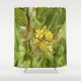 Rorippa Palustris Delicate Pale Mustard Flower Shower Curtain