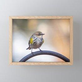 Pine Siskin Framed Mini Art Print
