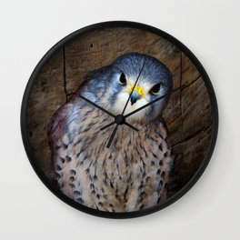 Falco tinnunculus or the common Kestrel Wall Clock