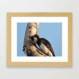 Did You Say HAWK? Framed Art Print