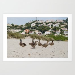 Ducks in one of the biggest and tourist beaches of Menorca, Son bou. Art Print