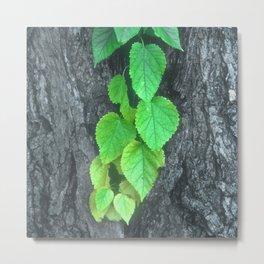 Cascade of Green Leaves Growing on Tree Bark Metal Print