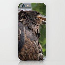 Juvenile Bald Eagle Watching iPhone Case